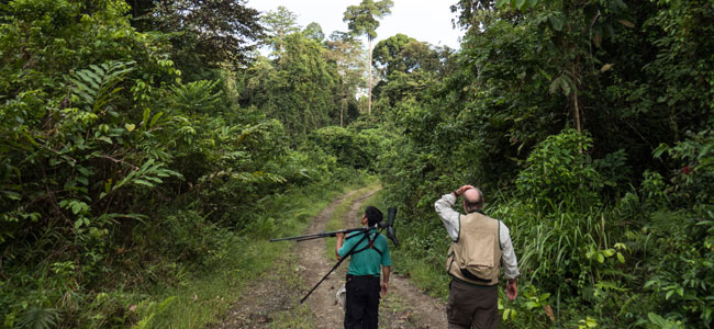 4D3N Birding at Tabin Package