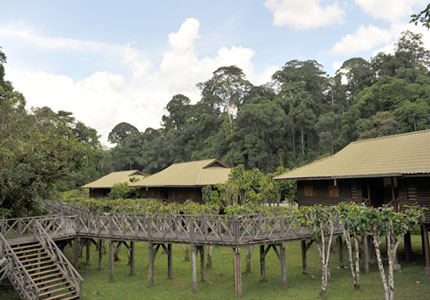 3D2N Danum Valley Rainforest Experience