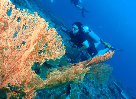 Miri Fun Dive (Miri-Sibuti Coral Reefs National Park) - For Cert Diver