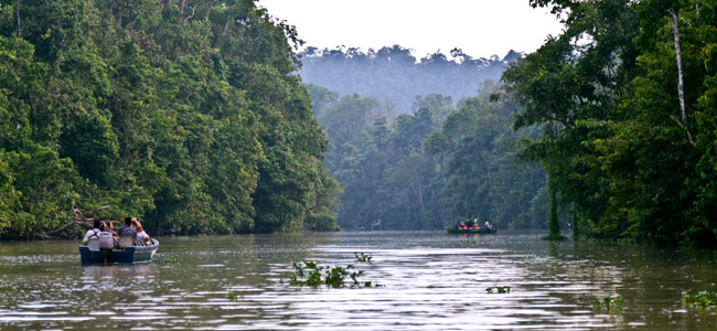 2d1n Nature Wildlife Of Kinabatangan River In Sukau Tour