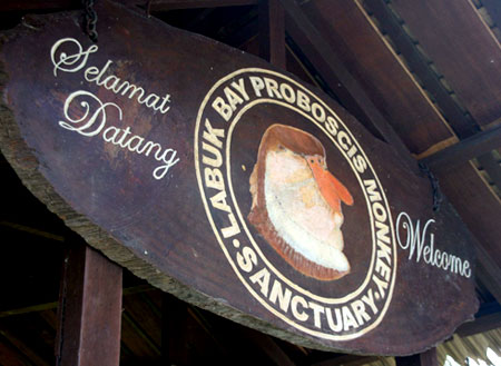3D2N Sepilok Orang Utan + Labuk Bay Excursion